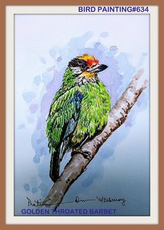PAKHI DEKHOON PAKHI CHINOON #634.. OBSERVE THE BIRD AND RECOGNIZE...GOLDEN THROATED BARBET... WATERCOLOUR...A4.. 2016...[From the photograph of MR. Arunava Sinha] ... The golden-throated barbet (Psilopogon franklinii) is an Asian barbet. Barbets are a group of near passerine birds with a worldwide tropical distribution. They get their name from the bristles which fringe their heavy bills. The golden-throated barbet is a resident breeder in the hills from northeast India east to..