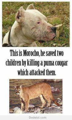 Ce chien à sauvé deux fillettes d'un puma en 2008