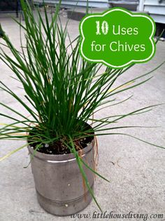 10 Uses for Chives plus a great recipe for Chive Infused Deviled Eggs!