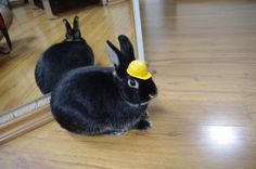 """Bunny Says """"Let's Get to Work!"""" - August 30, 2011"""