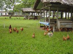 agroecologia e desenvolvimento rural sustentável - Pesquisa Google