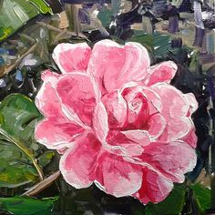 """""""Come on Camellia"""" - 6 x 6 inch, oil on panel, by Vicky Curtin. Camellia Oil, Flower Art, Paintings, Unique Jewelry, Handmade Gifts, Rose, Flowers, Plants, Vintage"""