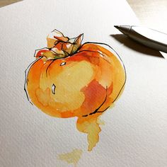 Persimmon Watercolor on paper