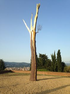 Giuseppe Penone - from July 5th to October 5th 2014 - Forte Belvedere/Giardino di Boboli - Florence