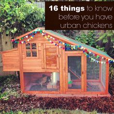16 things to know before you have urban backyard chickens.  From a regular, everyday suburban family.