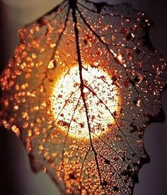 What an beautiful picture! What an amazing earth we have with what is here. We a鈥� What an beautiful picture! What an amazing earth we [. Creative Photography, Amazing Photography, Moonlight Photography, Photography Ideas, Alone Photography, Leaf Photography, Photography Lighting, Autumn Photography, Sunset Photography