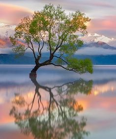Beautiful Nature Lake Wanaka – New Zealand