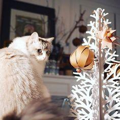 J'apprends à mon chat que les boules de Noël #fermliving, on les touche avec les yeux.  #christmas #christmasiscoming #léoncelechat #madecoamoi