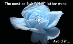♥♥ღPatrícia Sallum-Brasil-BH♥♥ღ soft blue rose Amazing Flowers, Beautiful Roses, My Flower, Beautiful Flowers, Birth Flower, Image Bleu, Ronsard Rose, Love Rose, Belle Photo
