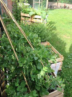 Gemüse-Kisten-Garten