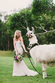 PENNY + CHRIS // The bridesmaids surprised the bride with llamas :)