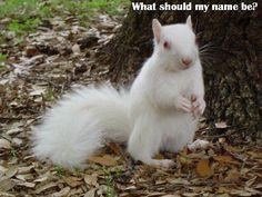 Albino Squirrel. <3