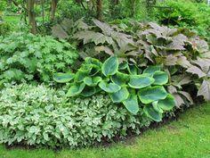 Habillez ce coin de jardin à l'ombre, sous un arbre ou une pergola... Avec des floraisons blanches, légères et surtout des feuillages persistants toute l'année, donnant un effet d'opulence végétale ! Au rendez-vous, hosta, rodgersia, herbe aux goutteux pour une jolie association de feuilles de toutes tailles, de couleurs contrastées, de forme différentes ! Bog Plants, Shade Plants, Green Plants, Moon Garden, Dream Garden, Blue Hosta, Growing Grass, Hosta Gardens, Backyard Farming
