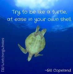 Quotes About Sea Turtles