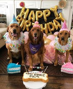 Dog Mom Discover The Ultimate Guide to Throwing Your Dog The Best Birthday Party Ever Dog party ideas- How To Throw A Party For Your Dog- From The dog bakery The Dog Bakery Dog Birthday Quotes, Dog First Birthday, Puppy Birthday Parties, Puppy Party, Birthday Ideas For Dogs, Party For Dogs, Birthday Treats, Birthday Cupcakes, Dog Themed Parties