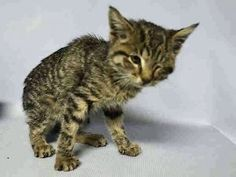 2 MONTHS OLD, UNDERWEIGHT, NO INTEREST IN FOOD - LEFT EYE CLOSED - DEHYDRATED, COLD SYMPTOMS - NEEDS FOSTER