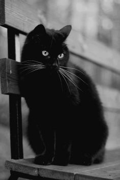 How I miss my cat Simon!  This cat looks just like him.  RIP Simon