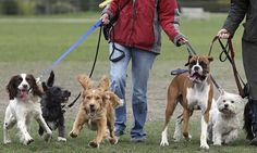 We are no longer paid what we are worth – just look at dog walkers Peter Fleming