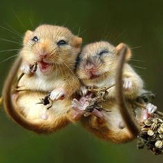 Cuddling dormouse Source by tieredisleksi dog dog memes dog videos videos wallpaper dog memes dog quotes dogs dogs pictures dogs videos puppies puppy video Cute Creatures, Beautiful Creatures, Animals Beautiful, Cute Baby Animals, Animals And Pets, Funny Animals, Wild Animals, Primates, Mammals