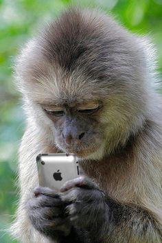 monkey checking out a phone. Monkey see, monkey do! Primates, Animals And Pets, Baby Animals, Funny Animals, Cute Animals, Beautiful Creatures, Animals Beautiful, Animal Pictures, Funny Pictures