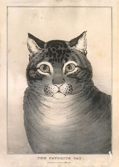 Lithographed and published by Nathaniel Currier (American, 1813–1888). The Favorite Cat, ca. 1840–50. The Metropolitan Museum of Art, New York. Bequest of Adele S. Colgate, 1962 (63.550.159) #cats