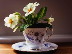 flowers in a teacup
