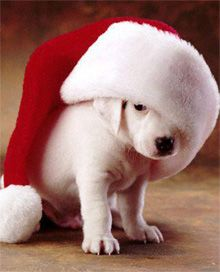 We love the holidays and we LOVE cute animals. So, naturally, we love these cute animals dressed up and ready for the holidays! Dog Christmas Pictures, Christmas Puppy, Christmas Animals, Christmas Humor, Merry Christmas, Christmas Quotes, Christmas Cards, Christmas Countdown, Christmas Morning
