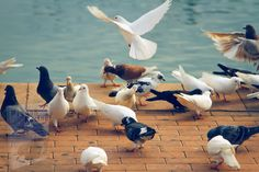 Dove Images, Dove Pictures, White Pigeon, Pigeon Bird, Time Lapse Photo, Pigeon Pictures, Homing Pigeons, Bird Stand, Brown Bird