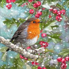 Scott Wilson - ROBIN - BERRIES - SNOW