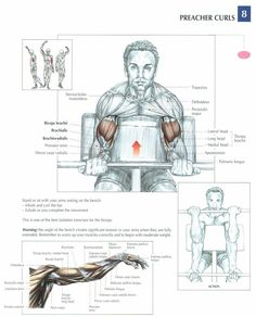 Preacher Curls ~ Re-Pinned by Crossed Irons Fitness