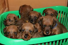 Four weeks old - a basket full of yrouble