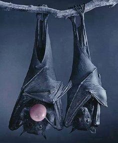 bubble gum bat?