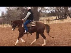 Moo Juice - Talented 3 yr old APHA filly For Sale | Buy this Horse at Equine.com