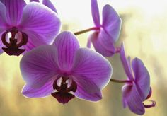 beautiful inspiration for Radiant Orchid