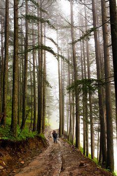 """Nature trail..."" by Amod Sane, Himachal pradesh, India"
