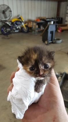Meet Moogy, found her while working on a car. We are best friends now. : aww