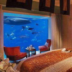 Under Water Hotel On Pinterest Aquarium Underwater Room