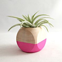 Geometric Air Plant Cube Planter // Neon Pink (with Air Plant) by seaandasters…