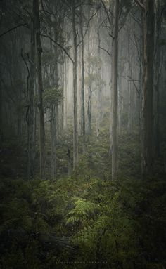 The Last of Us - A moment I had the pleasure of enjoying in the south west Karri forests, it was early morning with rain coming down, it created a beautiful atmosphere and the smell of the forest was incredible. This is my shout out to that feeling :)