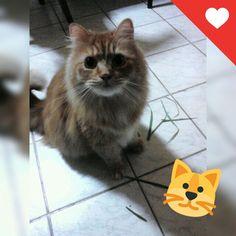 My cat.. Garfield ❤