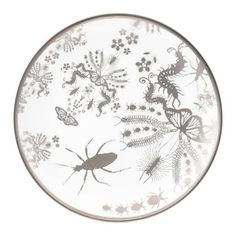 Entomo Cake Plate now featured on Fab.