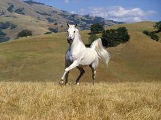 027 koně zvířata horses animals