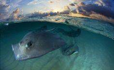 Evening Rays -Prachtige foto's van de 'Wildlife Photographers of the Year' - KnackWeekend.be