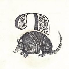 ARMADILLO: Something about these leathery armour shell grosses me out.