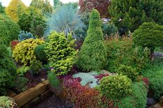 Trough Gardens with COnifers