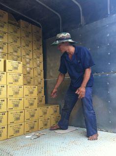 #cashew #hatdieumatong #hatdieurangmuoi #vietnamcashew #honeycashew #saltedcashew #bestcashew #cashewnut