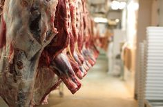 Animals Reportedly Butchered While Conscious, Running Around Bleeding and Shot in Head Deserve Justice. Please sign the petition. Those who show no mercy will receive no mercy says the Lord. Animal Slaughter, Dangerous Animals, Industrial, Stop Animal Cruelty, Food Facts, Animal Welfare, Animal Rights, At Least, Beef