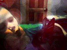 rabbit kisses