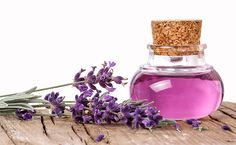 10 Scents That Repel Mosquitoes