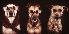 Adorables retratos de perros -- ¡Que no cunda el pánico! -- Sott.net
